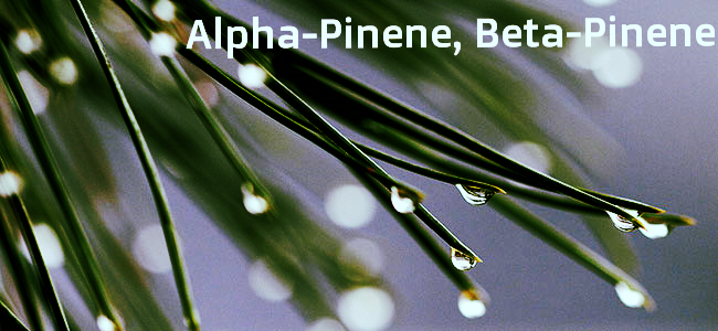 Aroma:Pine Effects:Alertness, memory retention, counteracts some THC effects Medical Value:Asthma, antiseptic Also Found In:Pine needles, rosemary, basil, parsley, dill *High Pinene Cannabis Strains:Jack Herer,Chemdawg,Bubba Kush,Trainwreck,Super Silver Haze