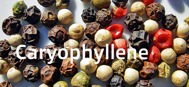 Aroma:Pepper,spicy,woody, cloves Effects:No detectable physical effects Medical Value:Gastroprotective,anti-inflammatory; good for arthritis,ulcers,autoimmune disorders, and other gastrointestinal complications Also Found In:Black pepper, cloves, cotton *High Caryophyllene Cannabis Strains:Hash Plant