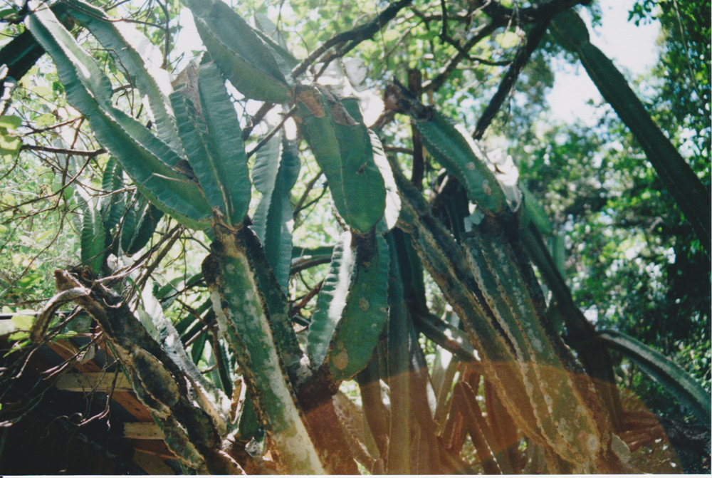 Scanned Image 9