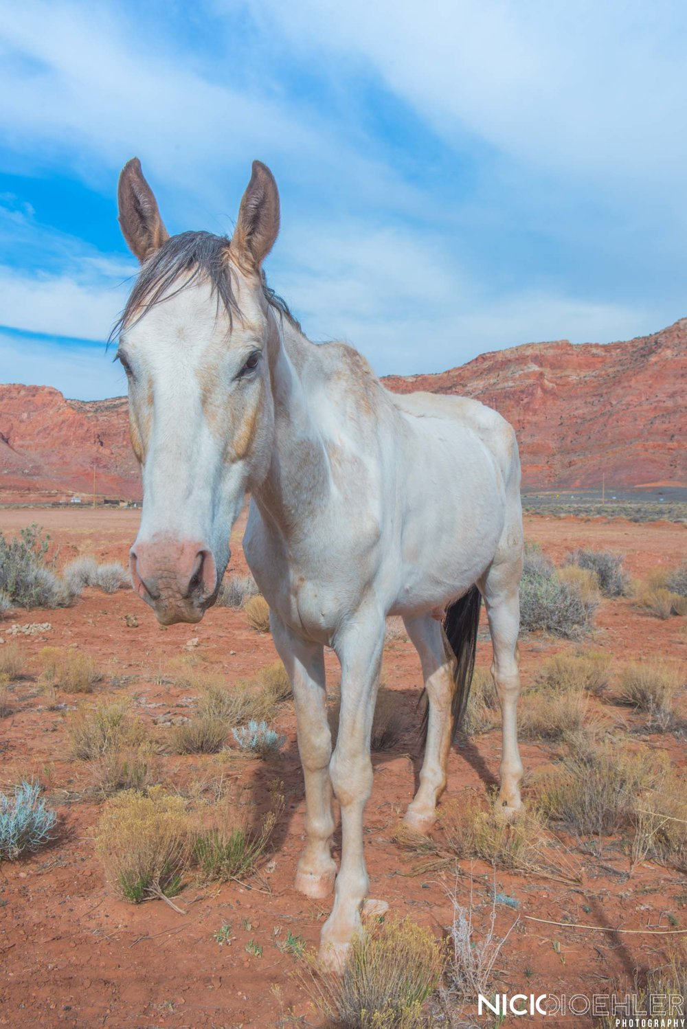 Arizona, USA: A random horse along the side of the road wanted to say hello.
