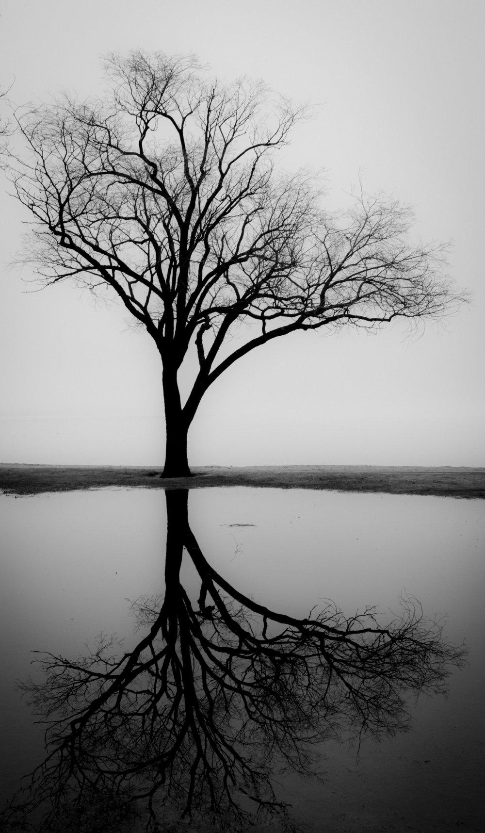 Reflections.jpg