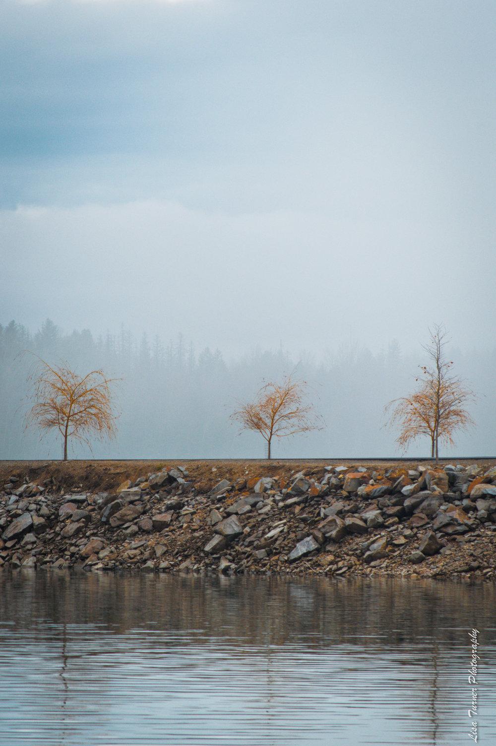 sandpointtrees-0159.jpg