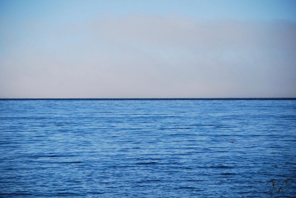 horizon 2.jpg