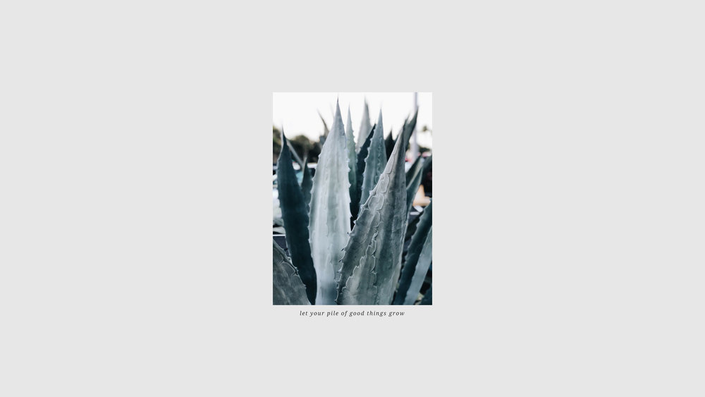Blue Agave Wallpaper copy 3.jpg