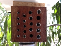 A bee hotel used in our experiments in urban remnants