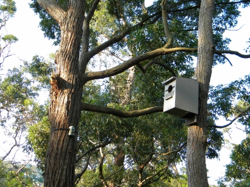 Nest box used by bats and birds in urban bushland