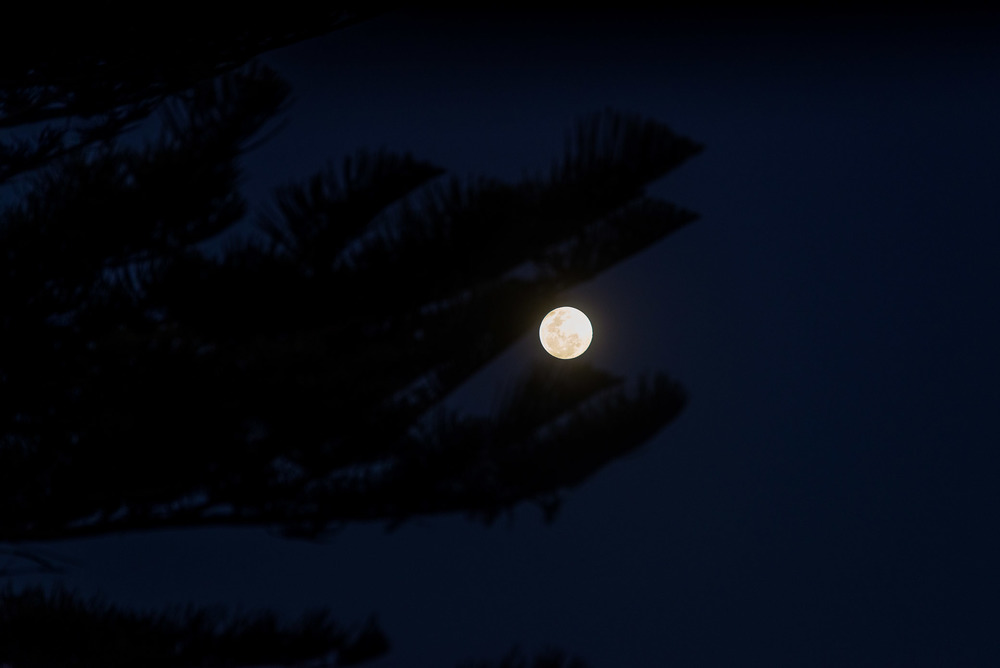 old man (super) moon sleeping in the pines where the don't ever shine