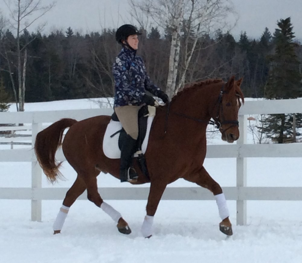 Congratulations to Karen Latter on fulfilling her lifelong dream by purchasing this dear boy!  We know that they will have a wonderful partnership and friendship and we couldn't be happier for either of them!
