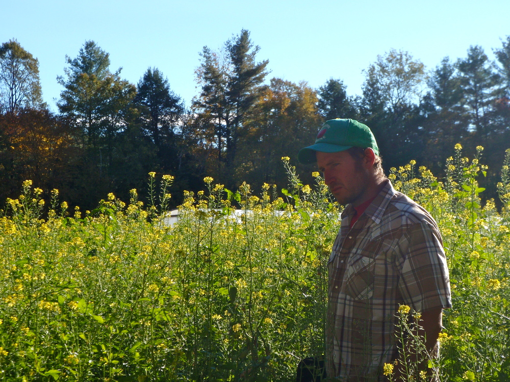 Ray in a field of mustard... prettiest of the cover crops.