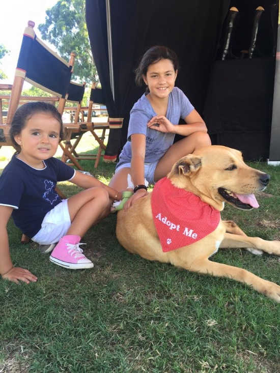 Two of our littlest fosters, pictured here with Sadie. Sadie was rescued from a high-kill shelter in the Los Angeles area. She is now in a wonderful forever home. Fostering saves lives.