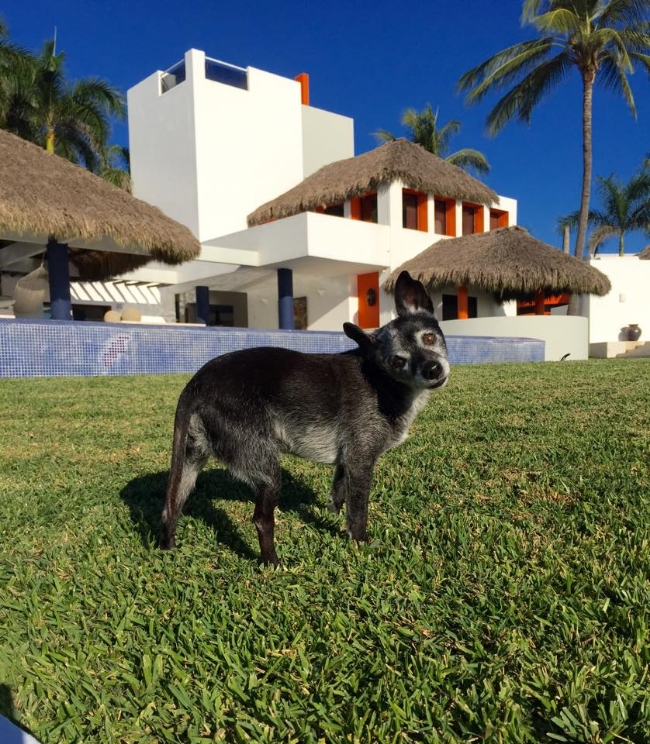 Thrive board member Marc Grock's beloved rescue, Freddie. Puerto Vallarta 2015.
