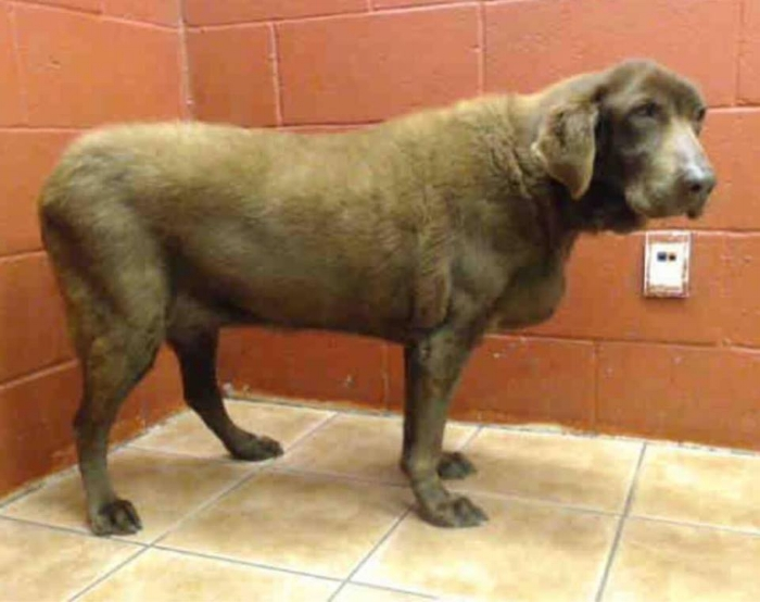 Reduced to a number, A5035722 went from the home she'd lived in for 14 years to cage D520.