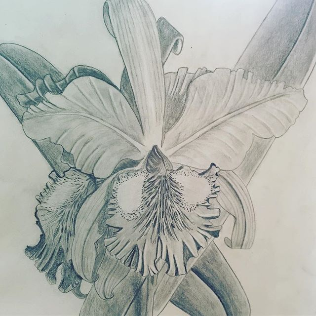 Taking a botanical illustration class, all the better to make my own anatomy visuals for my #FertilityAwareness curriculum. Here's my first project!