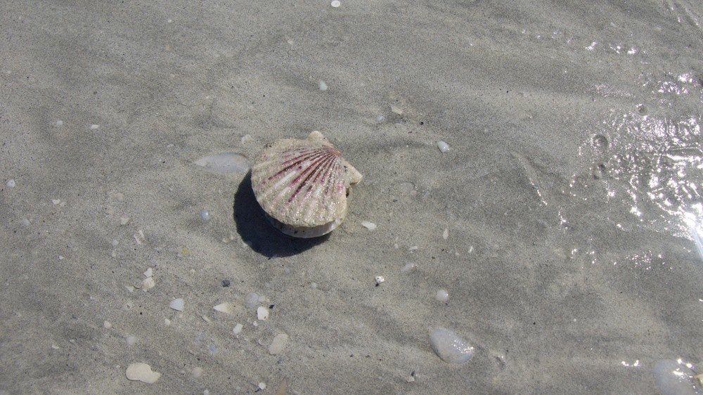 Sea_Shell.jpg
