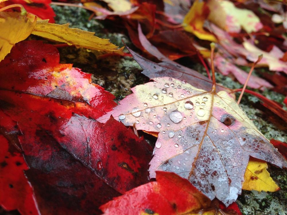 2014-10-18+14.54.06.jpg