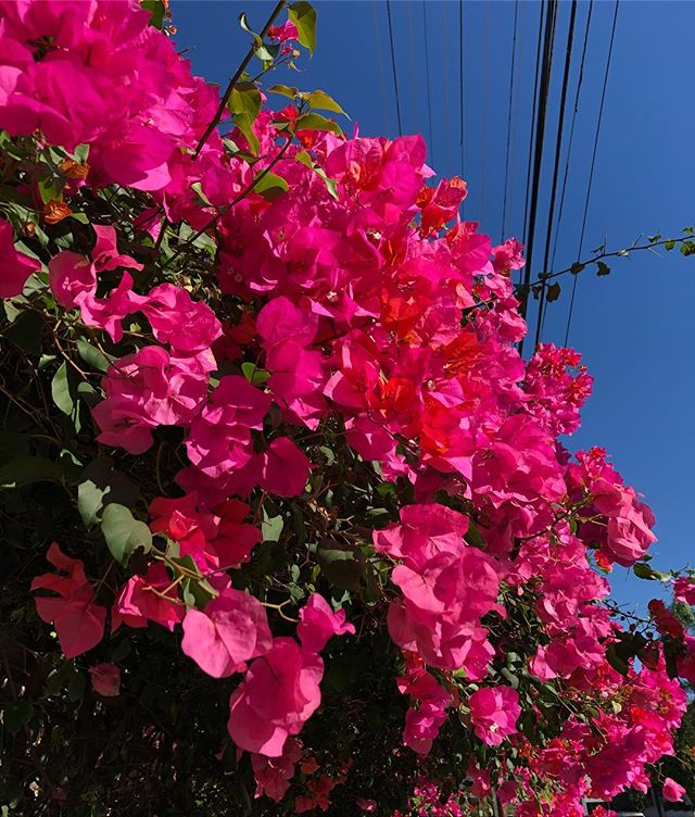 voted best plant on the block 10/10 would walk by again 🌺🌺🌺