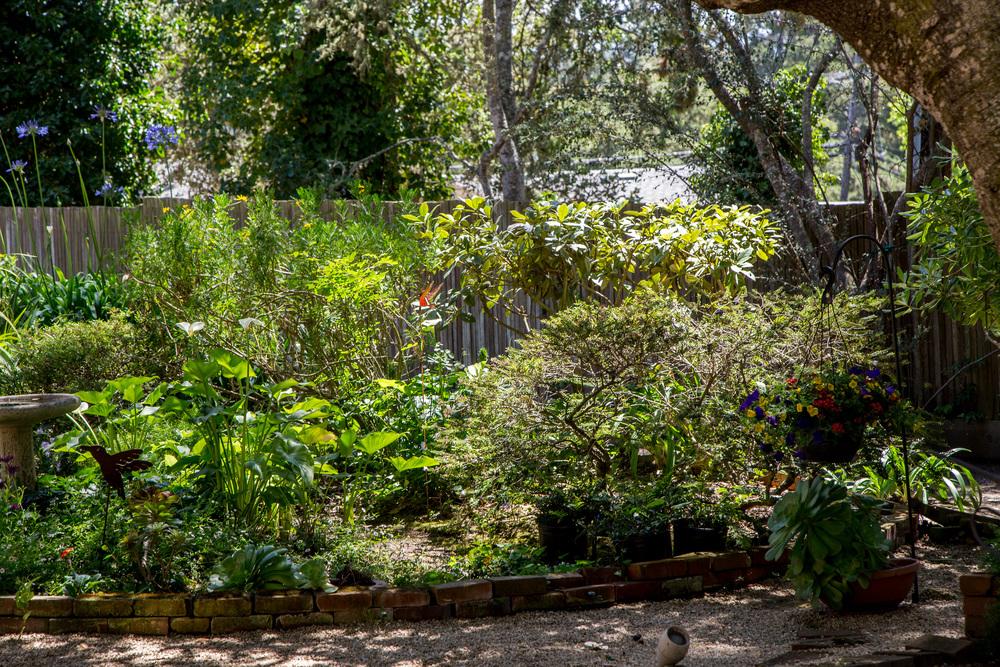 23 backyard 4.jpg