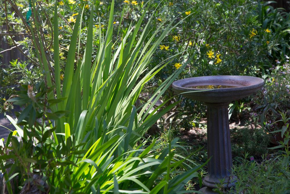 25 backyard 6.jpg