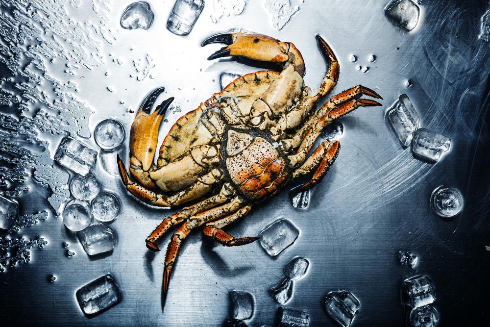 crab_flattened.jpg