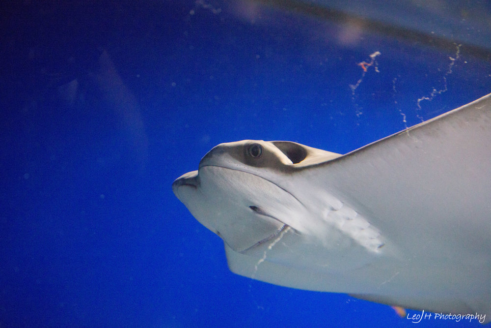 Probably my only good shot of a marine animal
