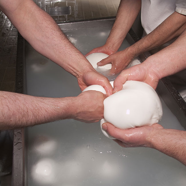 Hands on Mozzarella Class