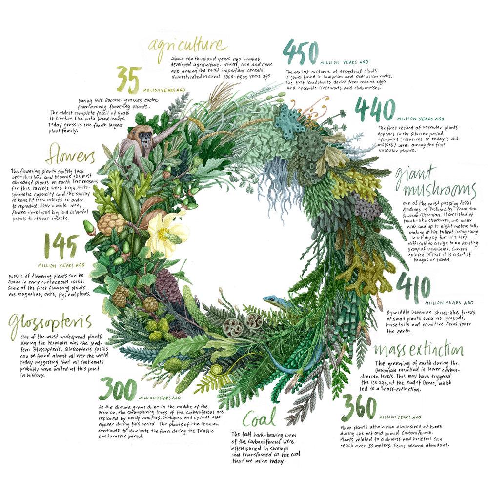 Växternas evolution