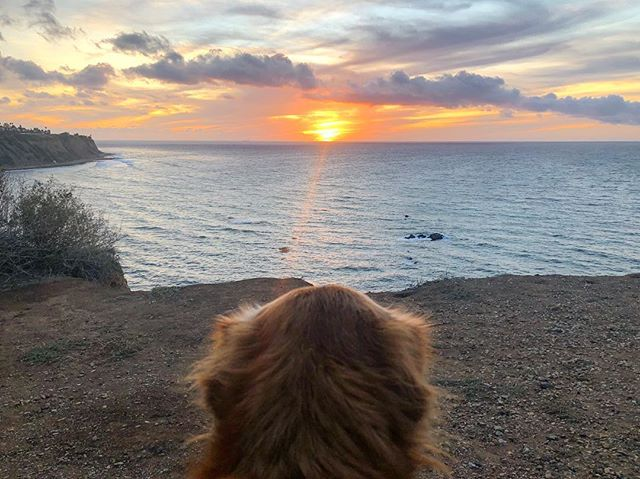 When your bff loves sunsets just as much as you. #walkswithnoel #goldenretriever