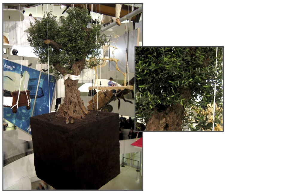 Olive Tree for ALL at the Guggenheim 2011