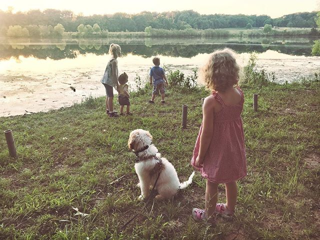 Beautiful night for a walk. #andydoodle #whitegoldendoodle #puppylove🐶 #goldendoodle #goldendoodlesofinstagram #3monthsold #goingtobeaservicedog #startingtrainingsoon #servicedog #seizuredog #hmnphotography