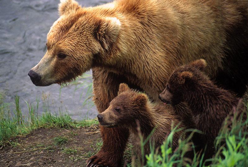 Mama Bear Ilse Werther