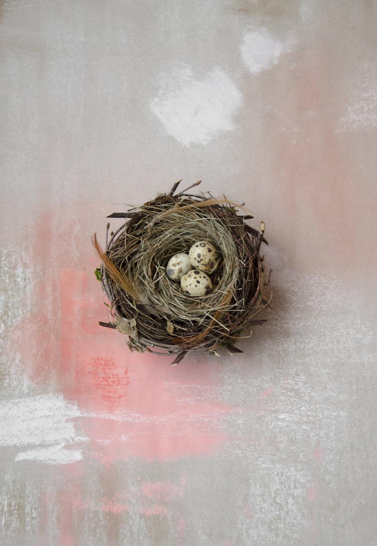 Nest 2.jpg