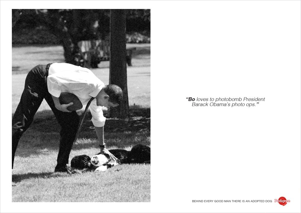 pedigree-print2.png