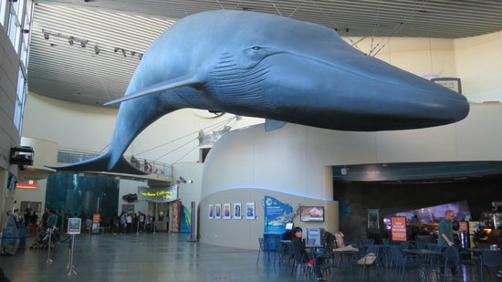 aquarium-of-the-pacific_whale.jpg