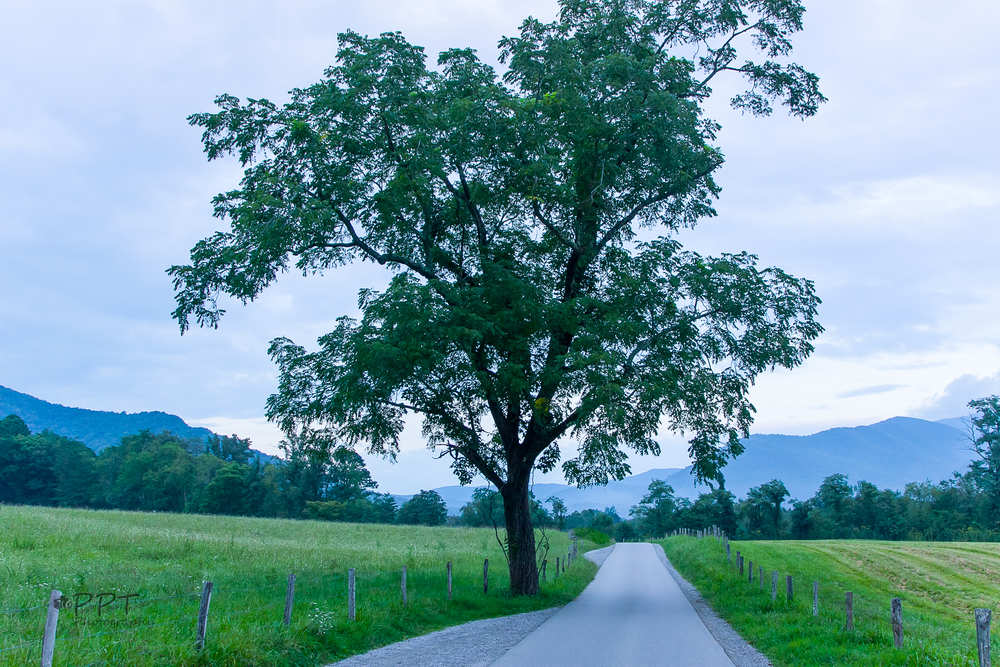 This tree in Cades Cove gets a lot of love