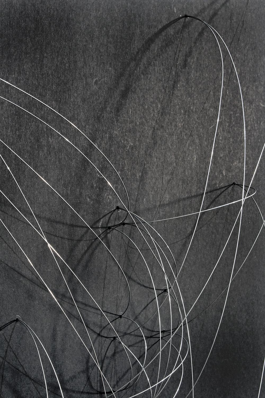 Trasplante-Trayectoria-detalle-2-web.jpg