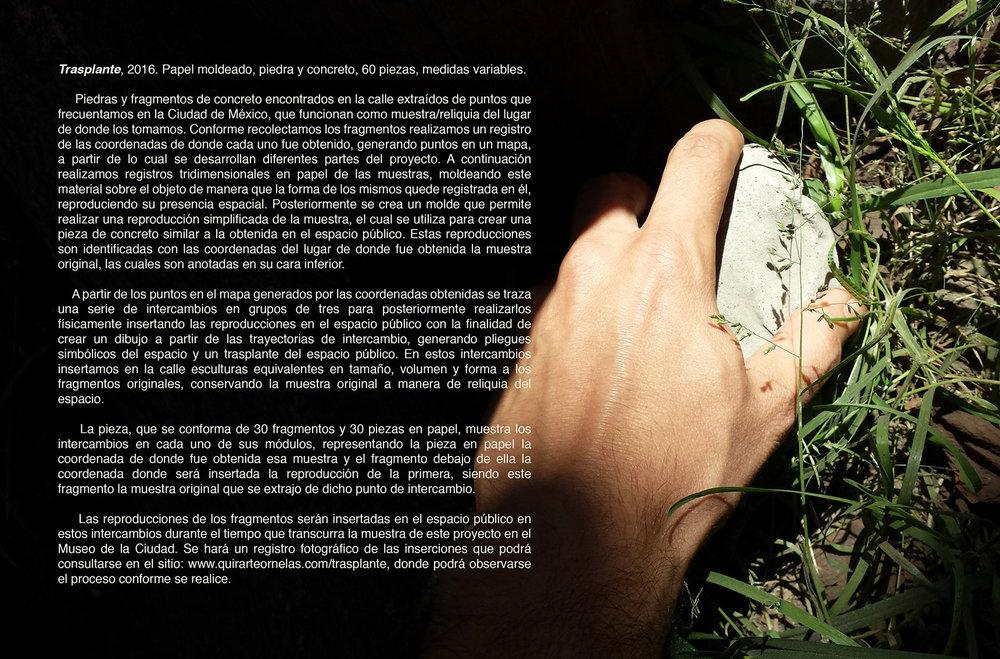 005-3-Texto-Trasplante-web.jpg