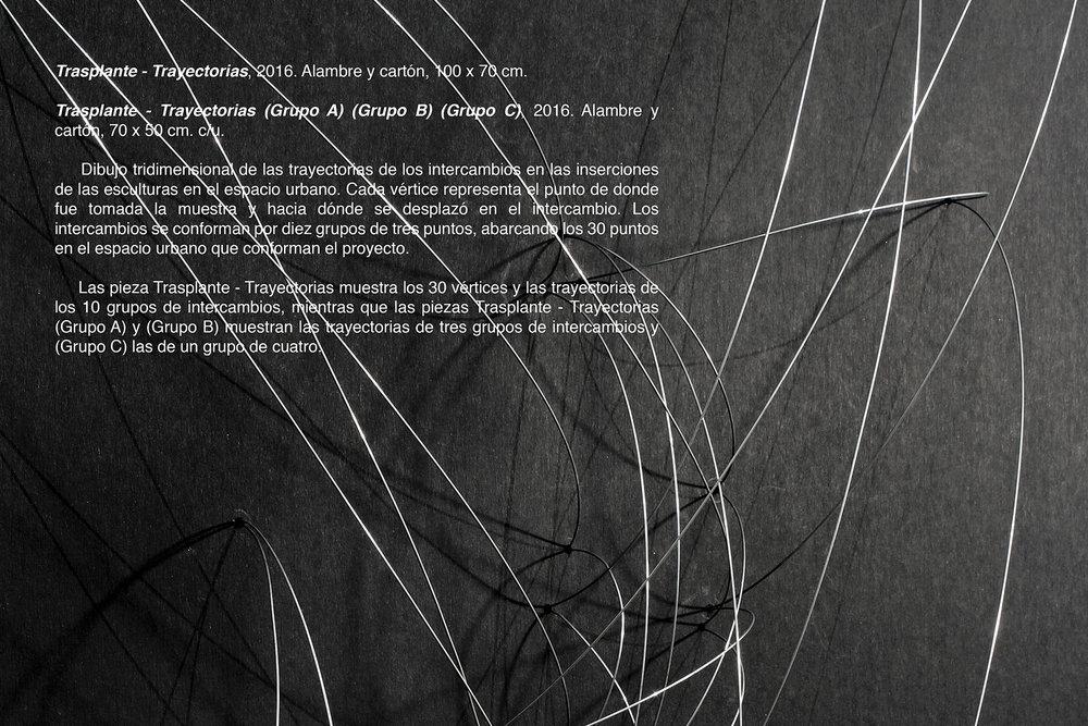 013-2-Trasplante-Trayectoria-texto-web.jpg