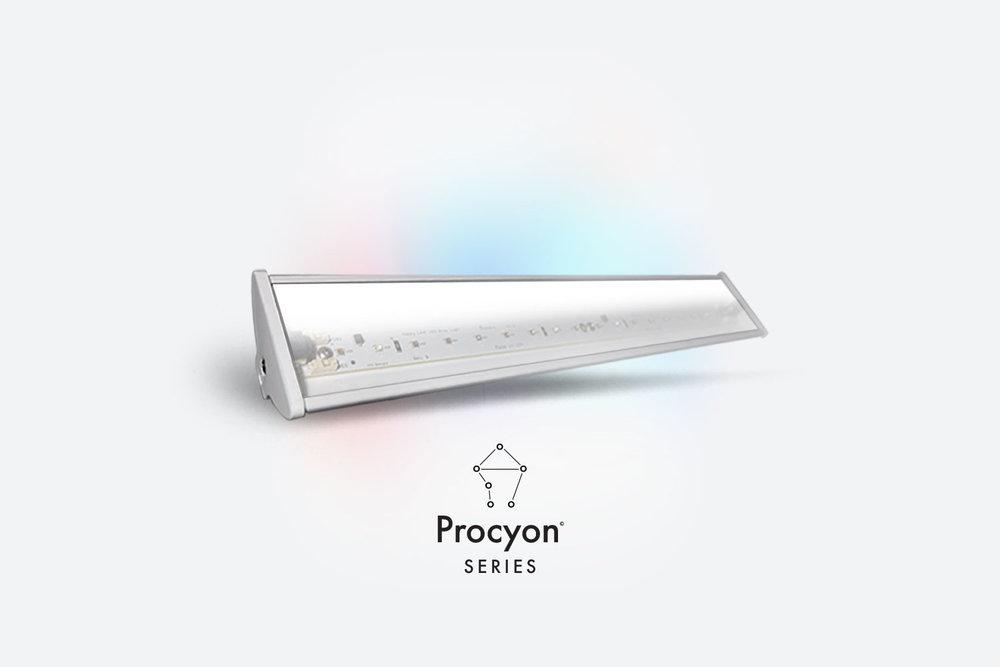 Procyon-17-A.jpg