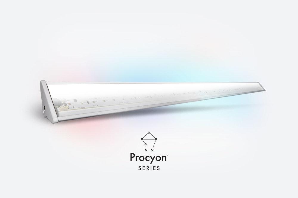Procyon-33-A.jpg