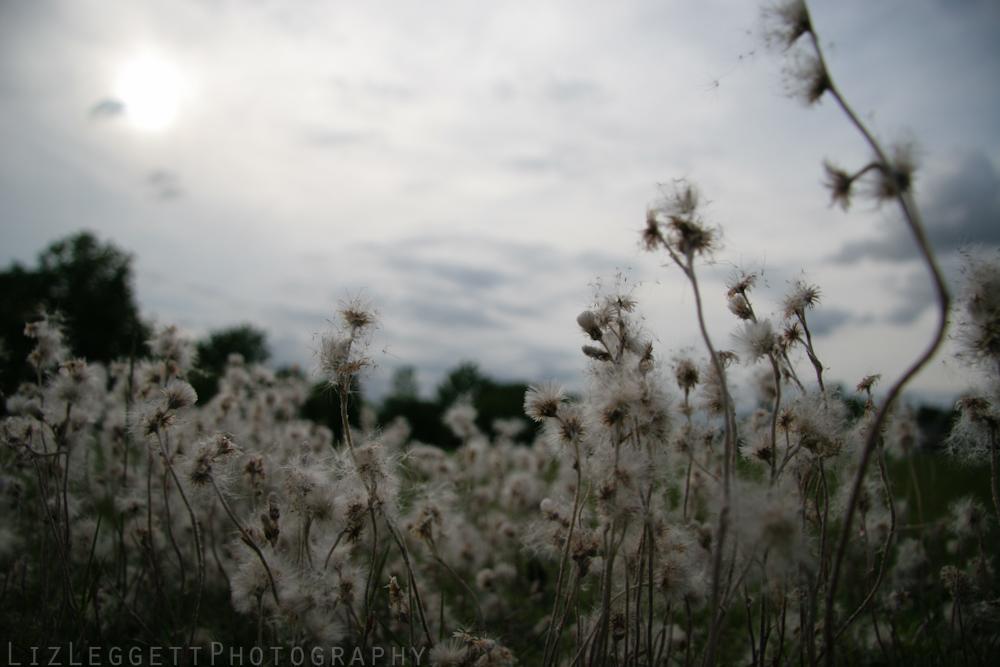 liz_leggett_photography_tumblr-9379.jpg
