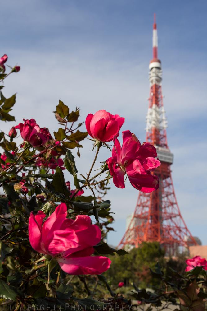 2015_Liz_Leggett_Photography_Japan_WATERMARKED-6734.jpg