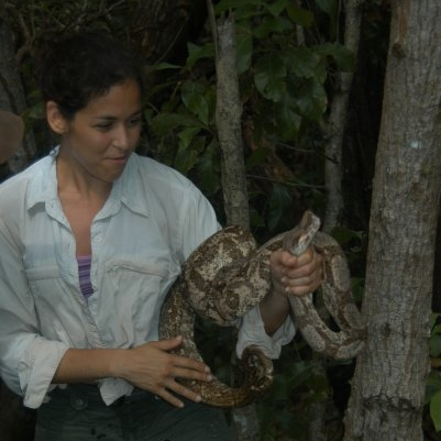 Honduras, Los Cayos Cochinos - 2007   Ecology of the endemic Hog Island  Boa constrictor