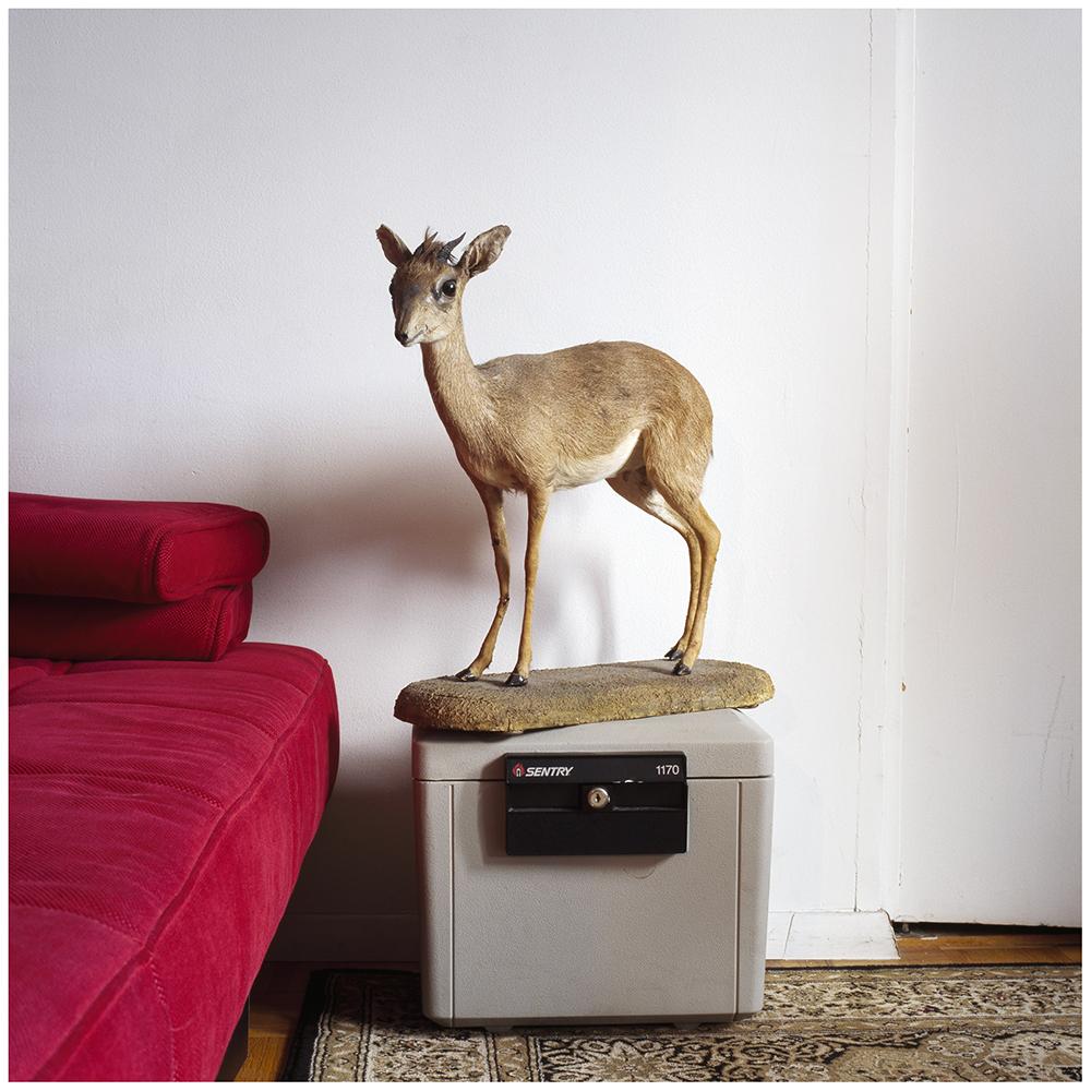 Deer15.25.jpg