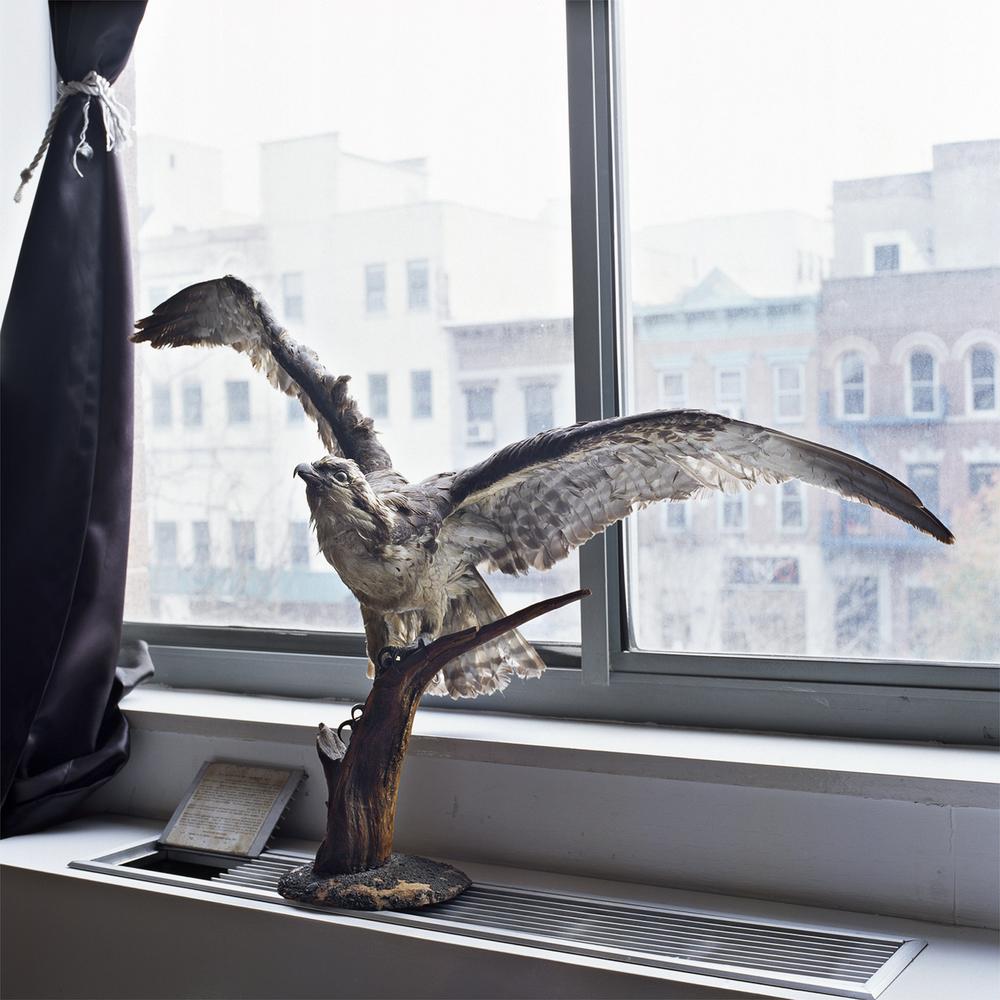 Bird_Portfolio8x8.jpg