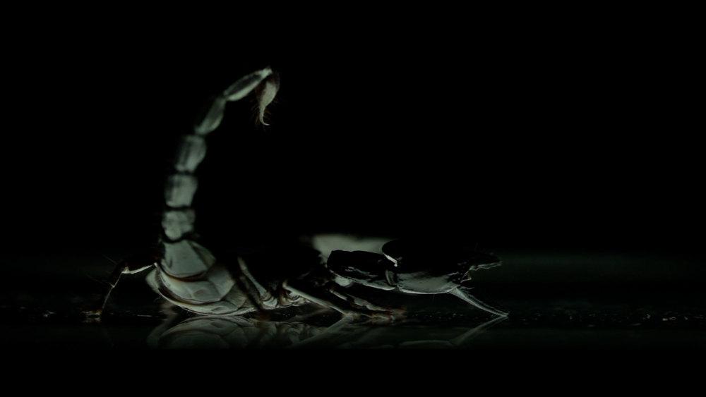 Scorpion_17.jpg