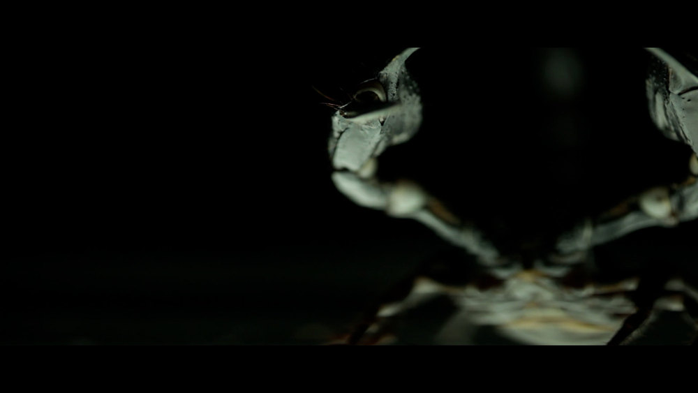 Scorpion_14.jpg
