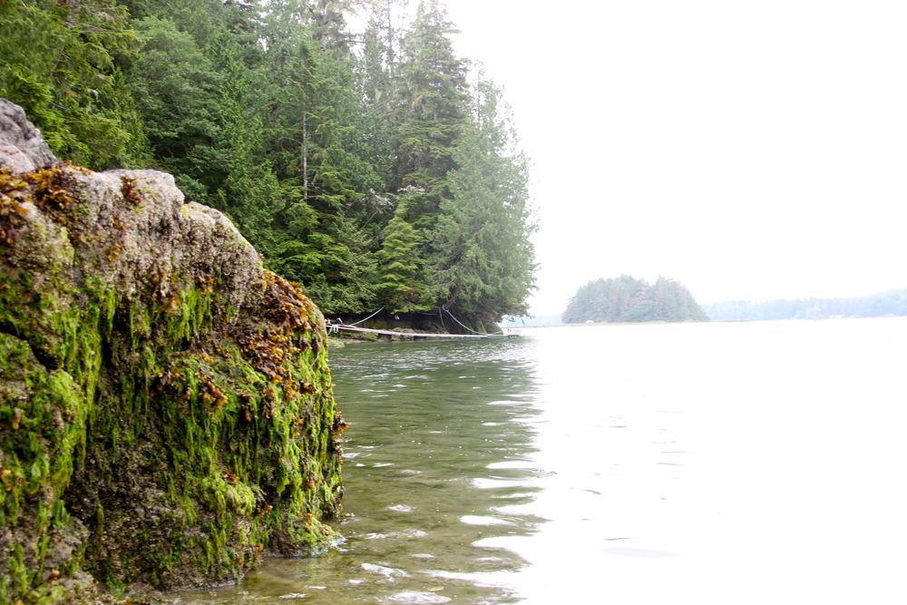 Meares Island, Tofino, BC, Canada.