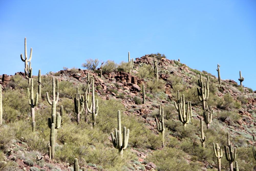 Cactus, Sedona, AZ.