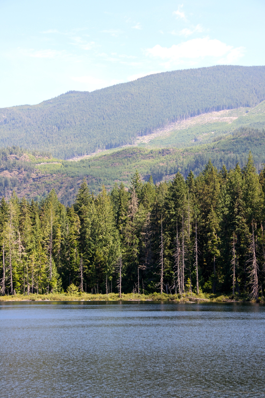 Skookumchuck Narrows Provincial Park, Sunshine Coast, BC, Canada.