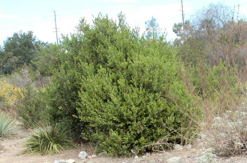 Bush 2.jpg
